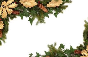 flora e fauna invernali foto