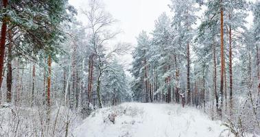 foresta invernale durante una nevicata