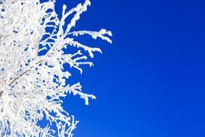 alberi d'inverno sul cielo blu