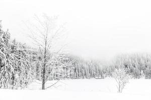 escursione invernale foto