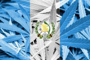 bandiera del Guatemala su sfondo di cannabis. politica sulla droga. legalizzazione della marijuana foto