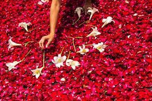 rendendo tappeto della settimana santa di petali di rosa, antigua, guatemala foto