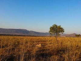 riserva naturale di loskop foto