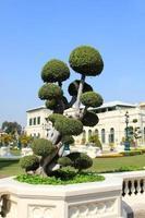 bonsai, grande palazzo foto
