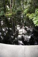 riflessione del soffitto di vetro del giardino botanico foto