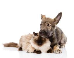 cucciolo e gatto di razza mista insieme foto