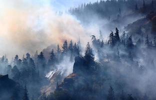 incendio forestale foto