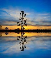 pianta su sfondo tramonto foto