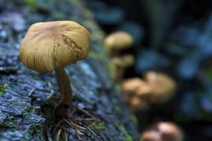 alto vicino del fungo foto