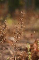 primo piano dell'erba foto