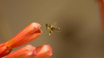 vespa di primo piano