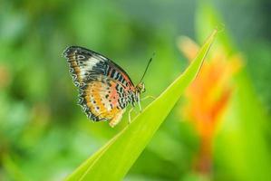 farfalla da vicino