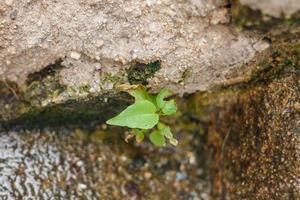 chiudere la pianta che cresce foto