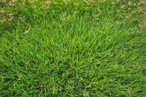 trama di erba da vicino foto
