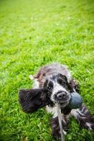 dammi questa palla foto