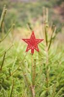 glitter stella rossa su un abete all'aperto per Natale foto