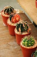 vicino molti cactus foto