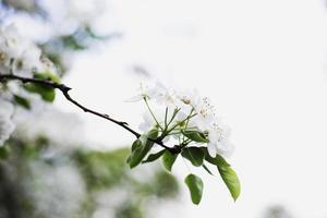 primo piano dei fiori foto