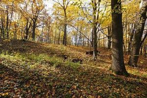 la foresta, autunno