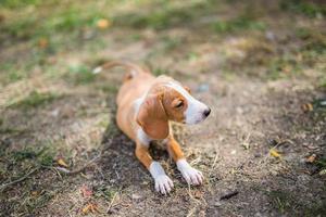 cuccioli di cane foto