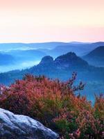 fioritura rosa del cespuglio dell'erica sulla scogliera. muggito della valle nebbiosa.
