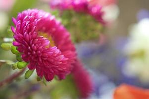 primo piano di disposizione dei fiori foto