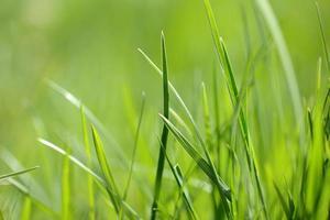 primo piano dell'erba verde foto