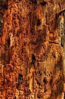 primo piano dell'albero malato