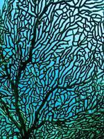 alto vicino del corallo del fan foto