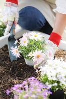 giardinaggio, piantine, piantare foto