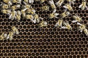 vicino a nido d'ape