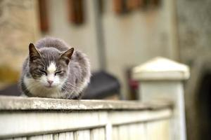 gatto foto