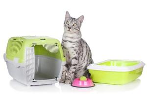 gatto del Bengala con roba di base per gatti