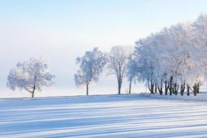albero d'inverno