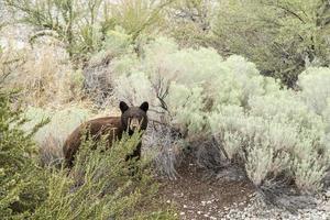 Ritratto di cucciolo di orso foto