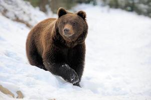 orso in inverno