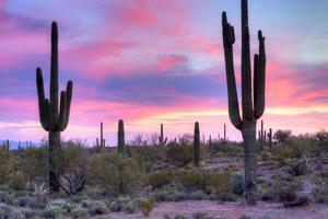 saguaro foto