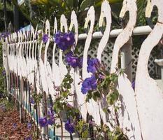 recinzione di flamigo foto