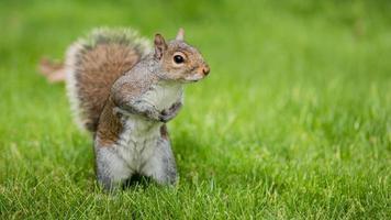 posa dello scoiattolo foto