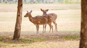 simpatica coppia di cervi nel parco