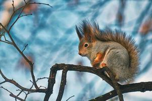 scoiattolo su un ramo. foto
