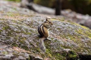 scoiattolo che mangia cibo dal palmo di un essere umano foto