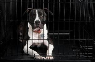 cane in gabbia foto