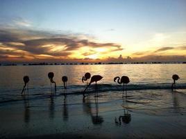 bellissimi fenicotteri su una spiaggia paradisiaca foto