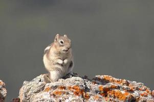 scoiattolo sulla roccia foto
