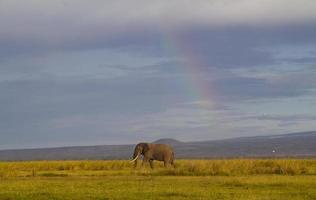 arcobaleno contro un elefante solitario