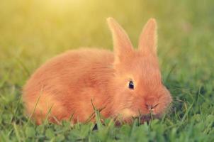 piccolo coniglio su erba verde