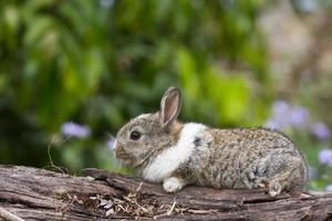 baby coniglio in erba foto