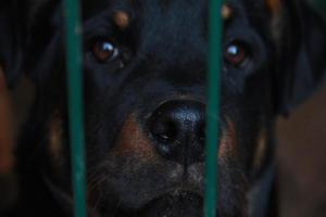 cucciolo triste della prigione