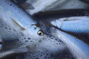 pesce foto